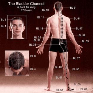 bladder channel